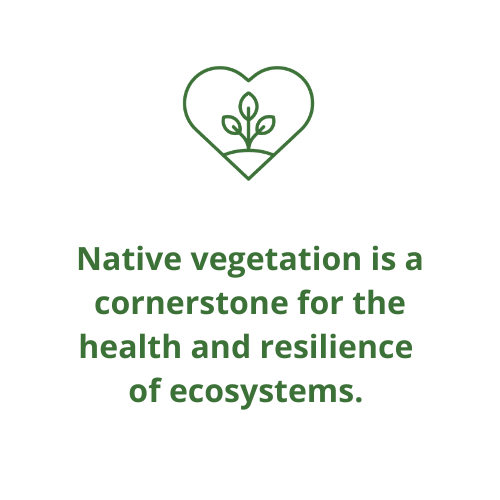 Native vegetation is a cornerstone for the health and resilience  of ecosystems.