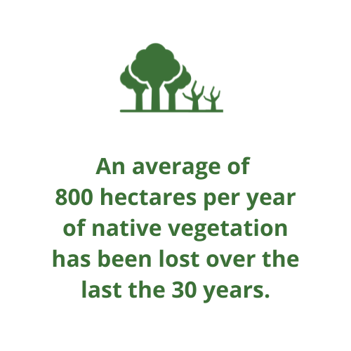 An average of  800 hectares per year of native vegetation has been lost over the last the 30 years.