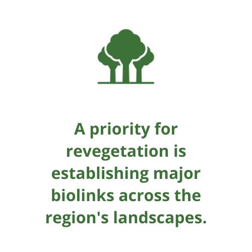 A priority for revegetation is establishing major biolinks across the region's landscapes.