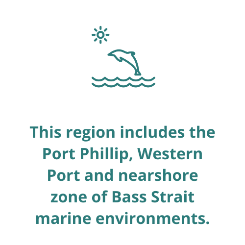 This region includes the Port Phillip, Western Port and nearshore zone of Bass Strait marine environments.