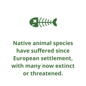 Native animal species have suffered since European settlement, with many now extinct or threatened.