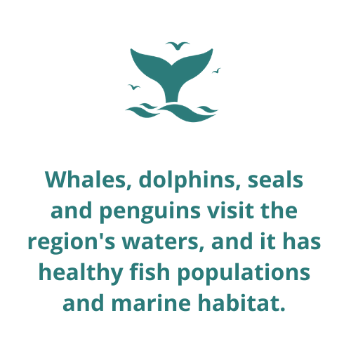 Whales, dolphins, seals and penguins visit the region's waters, and it has healthy fish populations and marine habitat.