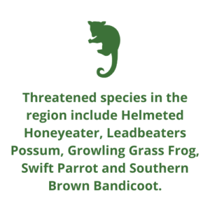 Threatened species in the region include Helmeted Honeyeater, Leadbeaters Possum, Growling Grass Frog, Swift Parrot and Southern Brown Bandicoot.