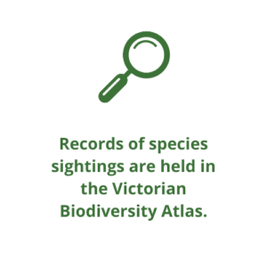 Records of species sightings are held in the Victorian Biodiversity Atlas.