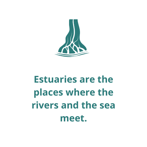 Estuaries are the places where the rivers and the sea meet.