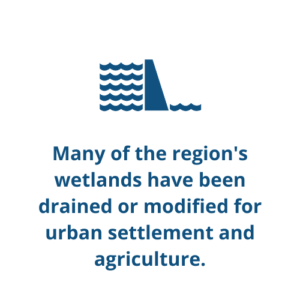 Many of the region's wetlands have been drained or modified for urban settlement and agriculture.
